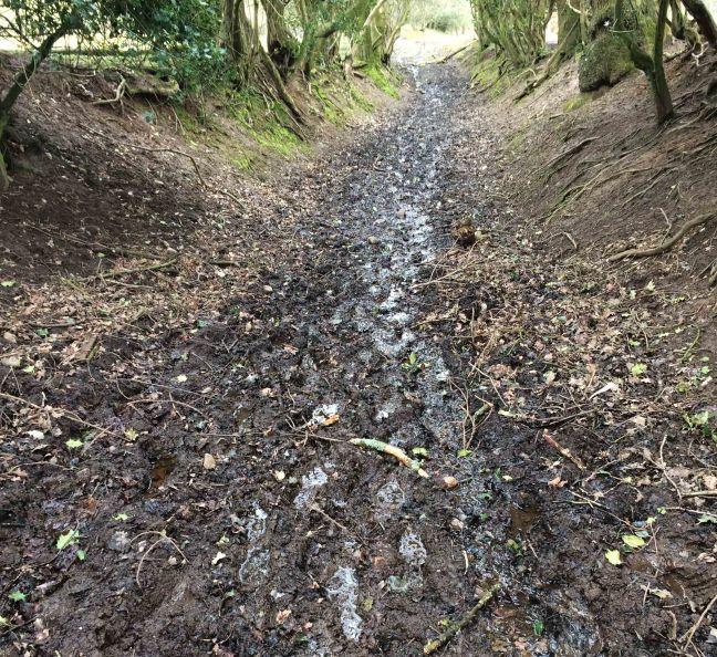 muddy path near Wincle, Macclesfield